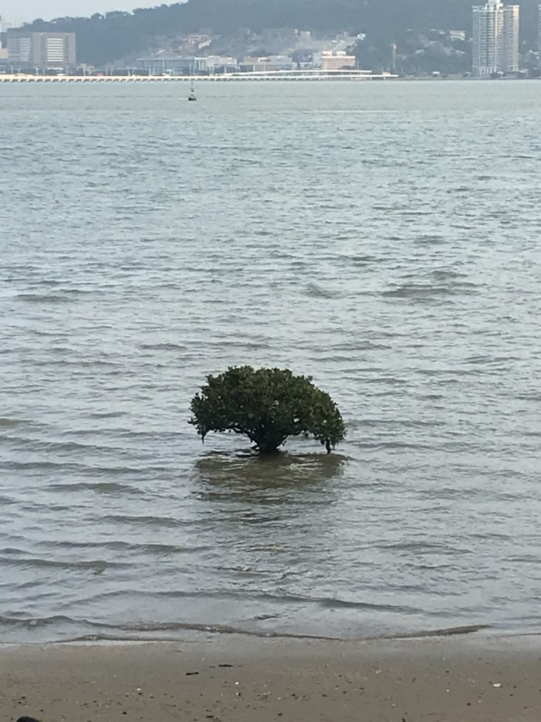 Tree growing on a beach in Macau.